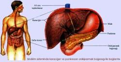 Karaciğere iyi gelen yiyecekler nelerdir? 6