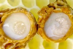 Arı sütünün çok önemli 10 faydası 4