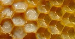 Arı sütünün 10 mucizevi faydası 3