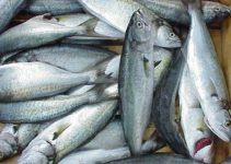 Balığın faydaları ve Balık yemek için 5 önemli neden 5
