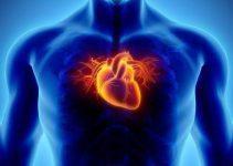 Kalbin görevi nedir, Kalp ne işe yarar ve nasıl çalışır? 3
