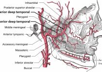 Temporal arterit nedir? Neden olur, belirtileri ve tedavisi 4