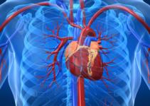 Kan dolaşımı nasıl hızlanır, Kan akışını bu yöntemlerle hızlandırın 3